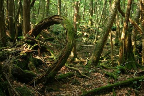 Forêt d'Aokigahara – Japon