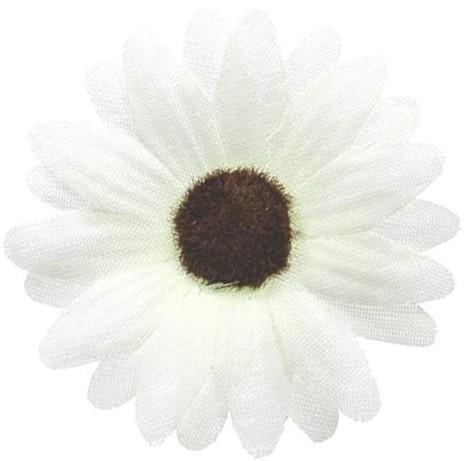 Fleurs sans tige blanches