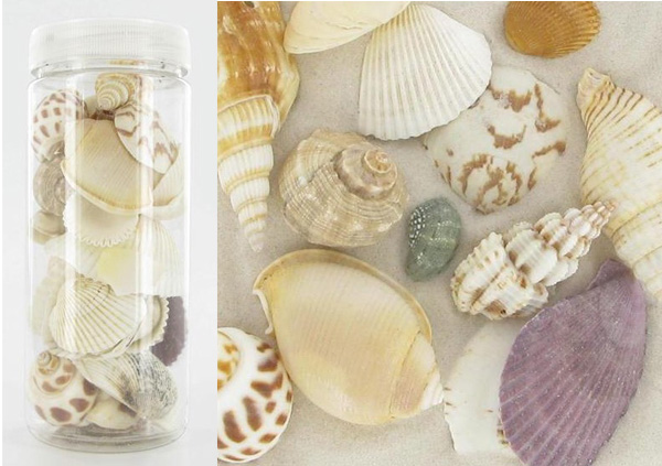 assortiment-coquillage