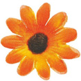 Fleurs sans tige, orange