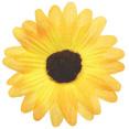 Fleurs sans tige, jaune